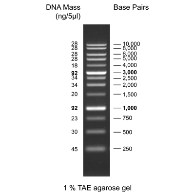 1kb Dna Ladder Rtu Ready To Use Genedirex Inc